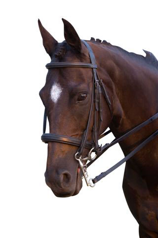 <b><i> Collegiate Raised Double Bridle</i></b>