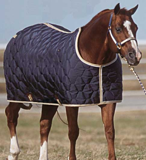 Big D Stable Blankets