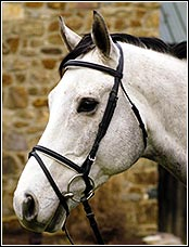 <b><i> HDR Padded Dressage Bridle with Laced Reins </i></b>