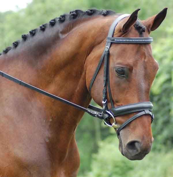 <b><i>Red Barn Salute Crystal Browband Dressage Bridle</i></b>