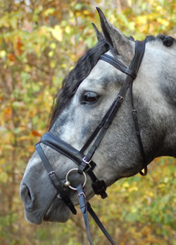 <b><i> KL Select Signature Dressage Bridle </i></b>