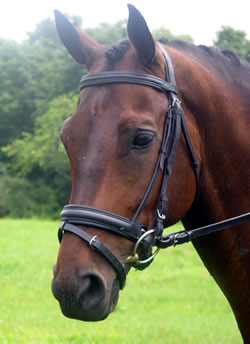 <b><i> KL Select Silver Signature Dressage Bridle </i></b>