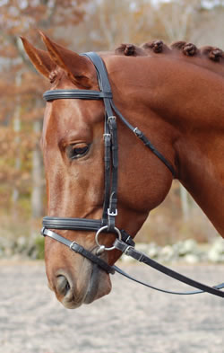 <b><i>Red Barn Volte Square-Raised Dressage Bridle</i></b>