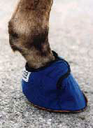 Equine Slippers For Horses