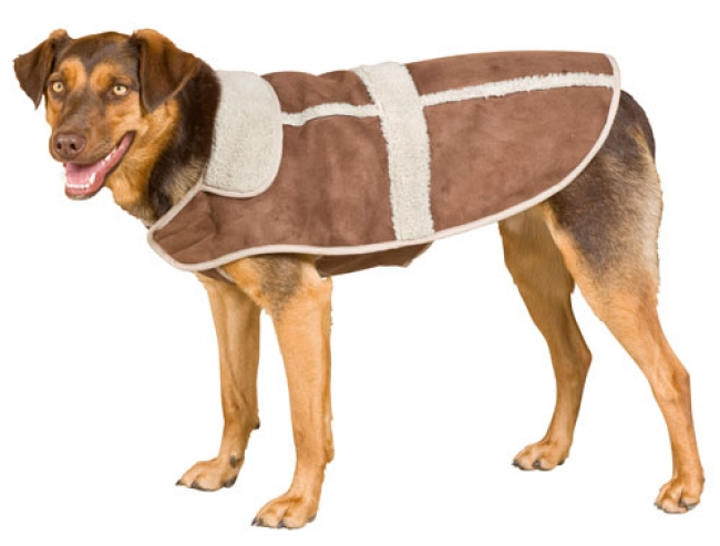 Weatherbeeta Moleskin Dog Coat In Chocolate