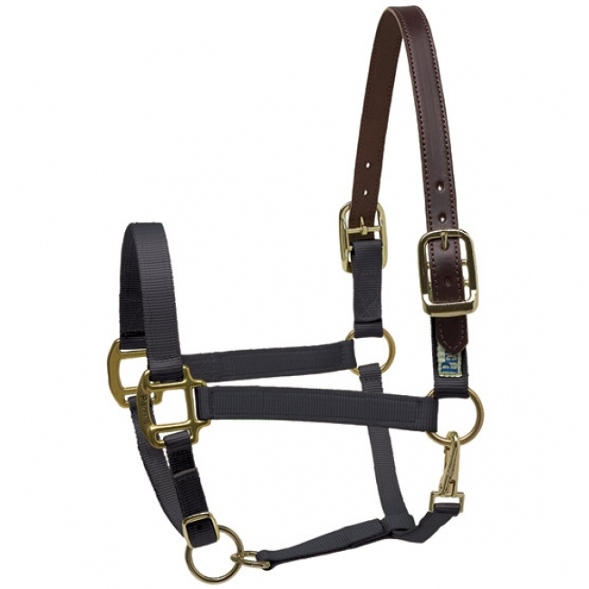 Perri's Nylon Safety Halter in Black