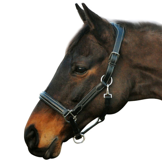 Hdr Pro Collection Leather Horse Halter